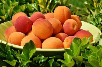 apricots-1522680_1920